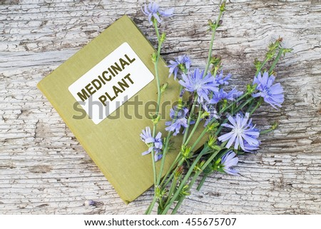 Medicinal plant common chicory (Cichorium intybus) and herbalist handbook. Used in herbal medicine, healthy eating. The roots of chicory are used as a coffee substitute - stock photo