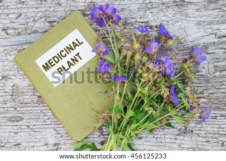 Medicinal plant Meadow geranium (Geranium pratense) and herbalist handbook. Used in herbal medicine, is a good honey plant - stock photo