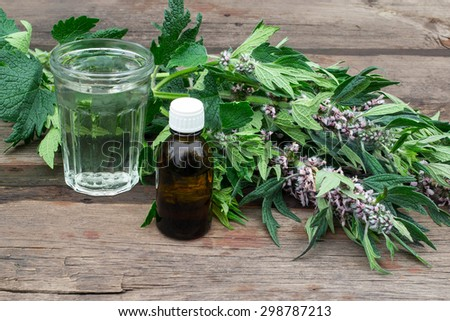 Medicinal plant motherwort (Leonurus)