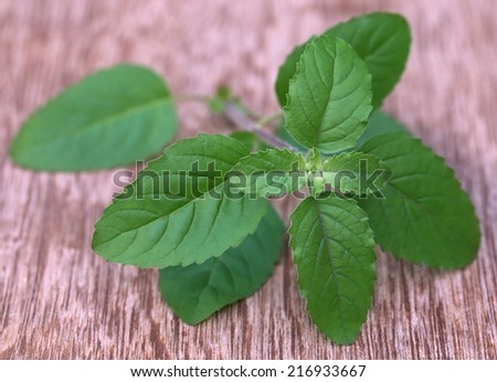 Medicinal red tulsi leaves on wooden surface - stock photo