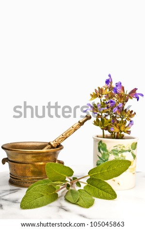 medicinal sage with mortar - stock photo