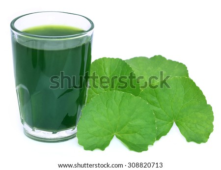 Medicinal thankuni leaves of Indian subcontinent with extract - stock photo