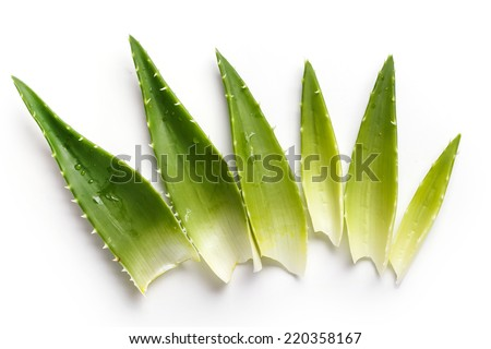 Medicine. Aloevera on a white background - stock photo