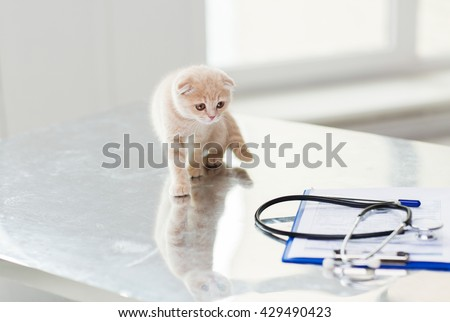 medicine, pets, animals, cats and health care concept - close up of scottish fold kitten and stethoscope with clipboard on table at vet clinic - stock photo