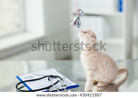 medicine, pets, animals, cats and health care concept - close up of scottish fold kitten playing with bow on table at vet clinic - stock photo