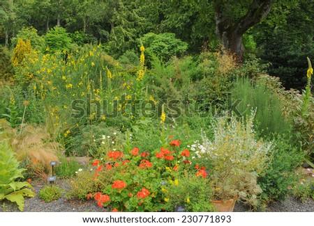 Mediterranean Style garden at Rosemoor, near Torrington, Devon, England, UK - stock photo