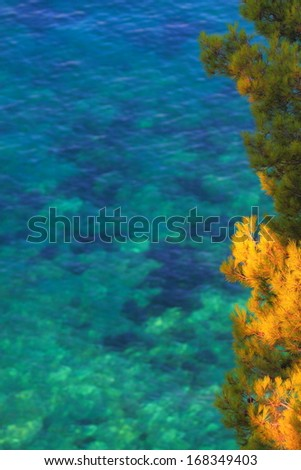 Mediterranean vegetation and clear water of Mediterranean sea in the background - stock photo