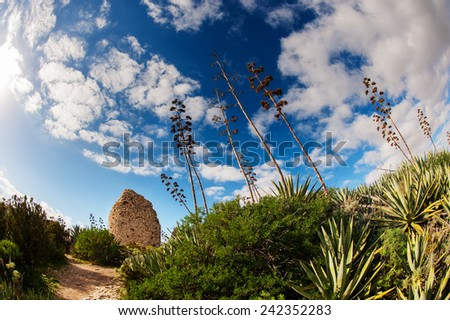 Mediterranean vegetation with a blue sky - stock photo