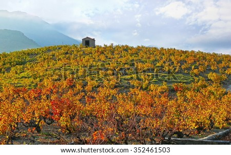 Mediterranean vineyard with a hut on a hill, Banyuls sur Mer, Pyrenees Orientales, Languedoc Roussillon, France - stock photo
