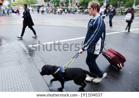 MELBOURNE - APR 14 2014:Blind man is led by his guide dog.Although the dogs can be trained to navigate various obstacles,they are partially color blind and are not capable of interpreting street signs - stock photo