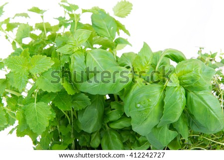 melissa, thyme and basil on white background - stock photo