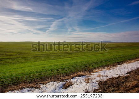 Melting snow on the field. agricultural background - stock photo