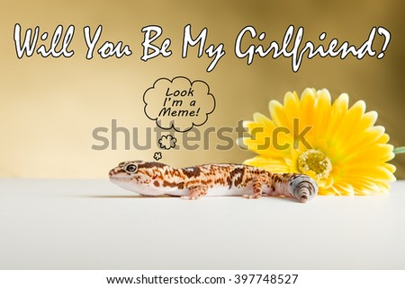 Meme style image featuring a leopard gecko. - stock photo
