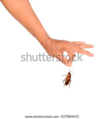 Men hand holding brown cockroach on white background - stock photo