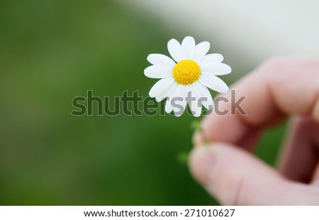 Men hands offering a beautiful daisy at camera - stock photo