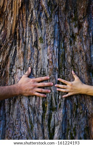 Men's and woman's hands hugging a tree - stock photo