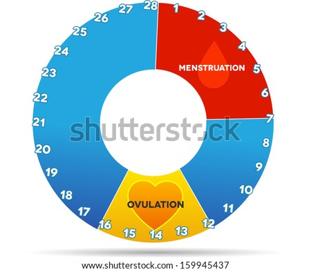 Menstrual cycle graphic. Average menstrual cycle days. Bleeding period ...