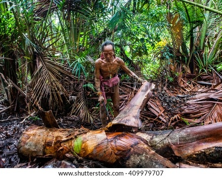 MENTAWAI PEOPLE, WEST SUMATRA, SIBERUT ISLAND, INDONESIA â?? 03 OKTOBER 2011: Man Mentawai tribe produces larval beetles in the sago palm. 03 October, 2011. West Sumatra, Siberut island, Indonesia. - stock photo
