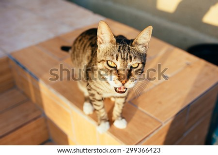 Meowing cat portrait at the street. Looking at the camera. - stock photo