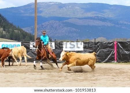 MERRITT, B.C. CANADA - MAY 5: Cowboy during the cutting horse event at The Merritt Cutting Horse Show May 5, 2012 in Merritt British Columbia, Canada - stock photo