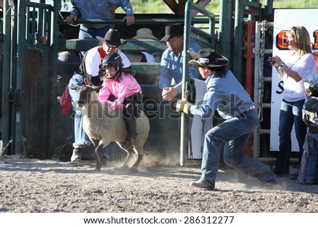 MERRITT, B.C. CANADA - May 30, 2015: Mutton Busting at the The 3rd Annual Ty Pozzobon Invitational PBR Event. - stock photo