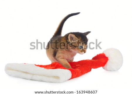 Merry Christmas Baby Cat with Santa hat on white background - stock photo
