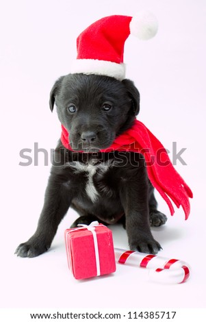 Merry Christmas - portrait of cute  puppy with Christmas gift - stock photo