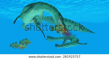 Mesosaurus Marine Reptile - Mesosaurus marine reptile attacks a Mangrove Jack Snapper fish in a Permian ocean.  - stock photo