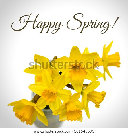 Message Happy Spring above Group of beautiful Daffodil flowers isolated against white background - stock photo