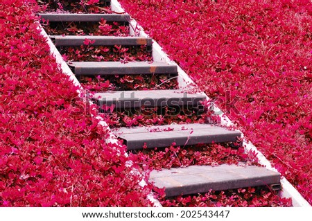 metal stairway on pink field - stock photo