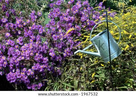 Metal Watering Bucket Hanging in Garden - stock photo