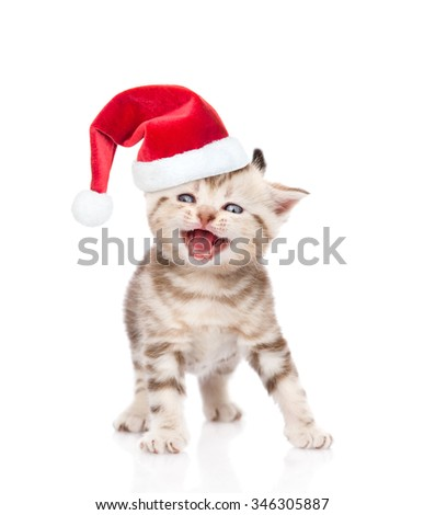 Mewing kitten in red christmas hat. isolated on white background. - stock photo
