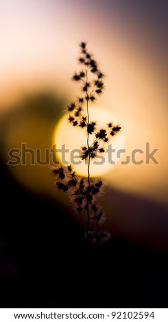 Mexican Desert Sunset With A Low Depth Of Field Focus On The Branch Of A Cactus Offshoot Swaying Directly In Front Of The Sun - stock photo
