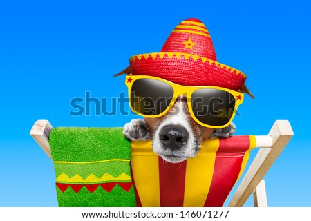 mexican dog on vacation relaxing on a deck chair - stock photo