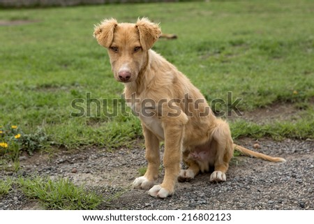 Mexican mutt stray dog sitting outdoors - stock photo