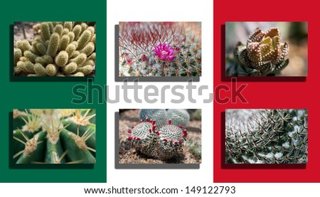 Mexico Flag With Cactus Picture - stock photo