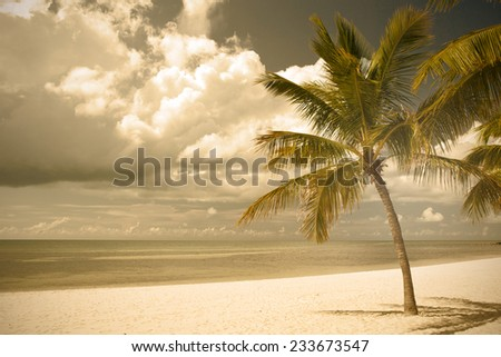 Miami Beach Florida,  palm trees by the ocean, filtered desaturated nature landscape - stock photo