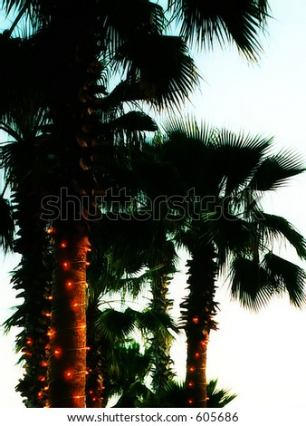 Miami Christmas Palms - stock photo