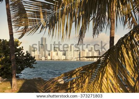Miami, Florida seen between palm trees - stock photo