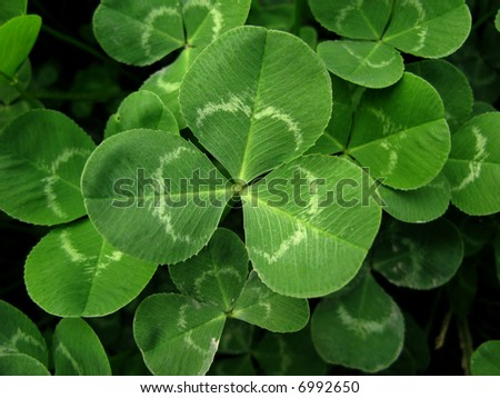 Micro shot of clover in the garden - stock photo