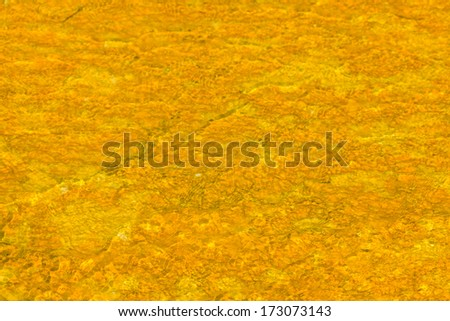 Microbial mats in geothermal pools, Yellowstone National Park ,Wyoming - stock photo
