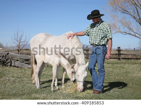 mid-adult cowboy with white white horse and baby in a field - stock photo