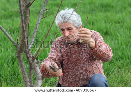 Mid adult man pruning tree in orchard selective focus on face - stock photo