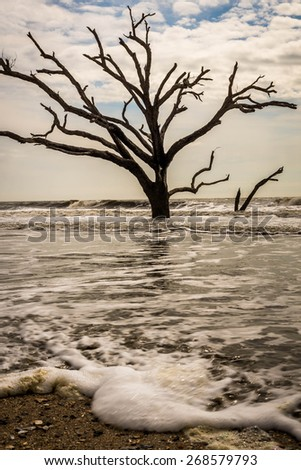 Mid day during high tide at Botany Bay Beach Boneyard on a warm spring day on Edisto Island.  - stock photo