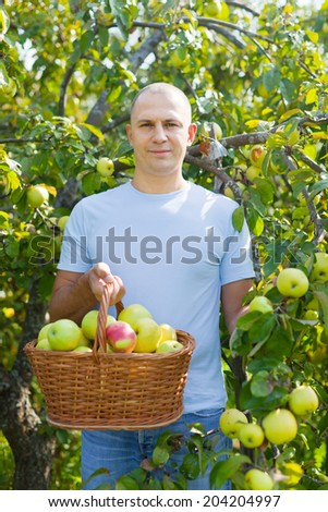 Middle-aged man with apple harvest in orchard - stock photo