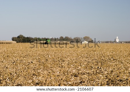 Midwest corn field being harvested - stock photo