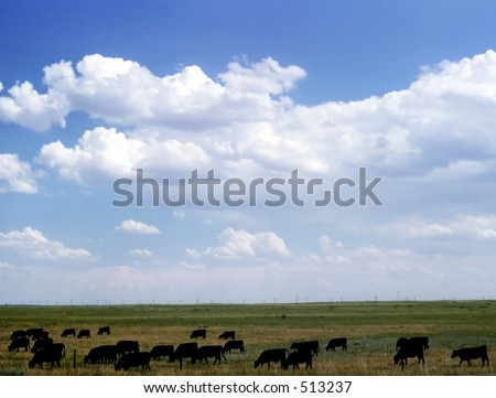 Midwestern Cattle Ranch - stock photo