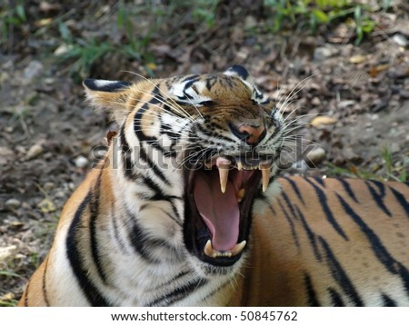 Mighty Roar - stock photo