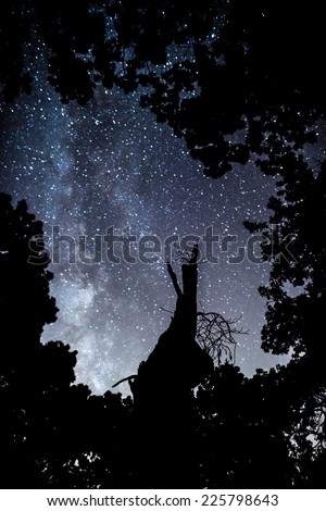Miiky Way galaxy being framed by trees. - stock photo