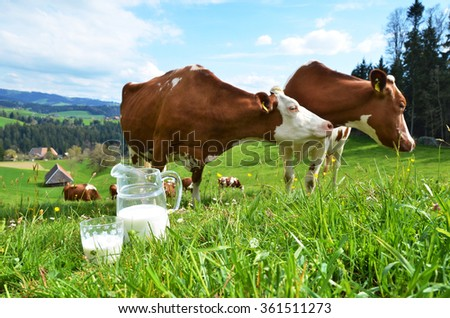 Milk and cows. Emmental region, Switzerland - stock photo
